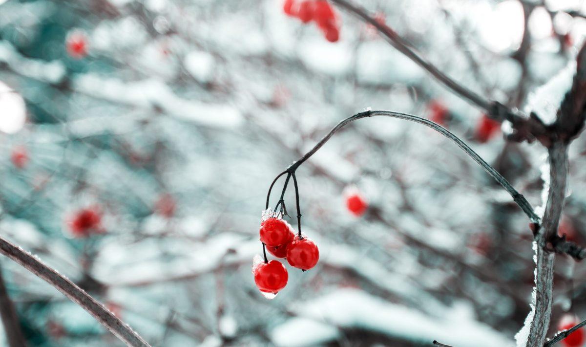 Wintertuin-Tuinbestratingwinkel